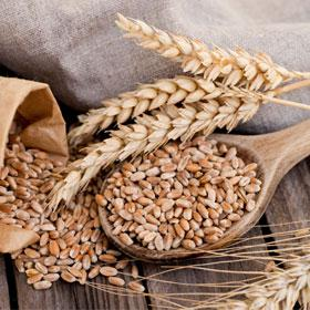 wat is gezonder spelt of tarwe nbc